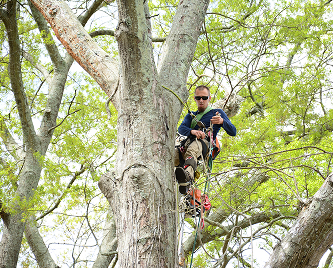 Birmingham tree service is home to the top tree experts in Birmingham offering tree removal, limb trimming, limb removal, stump grinding, emergency tree work, and more.