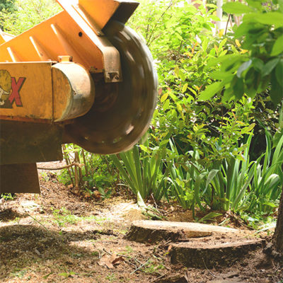 Birmingham stump grinding with professional tree experts at Champion Tree Service