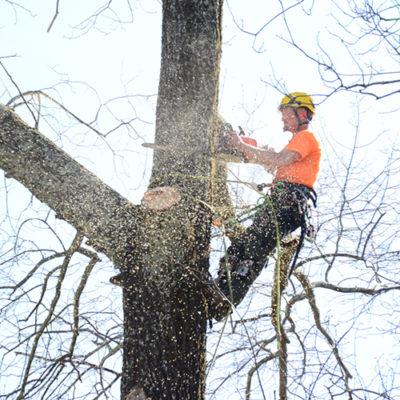Birmingham tree removal by Champion Tree Service in Birmingham AL