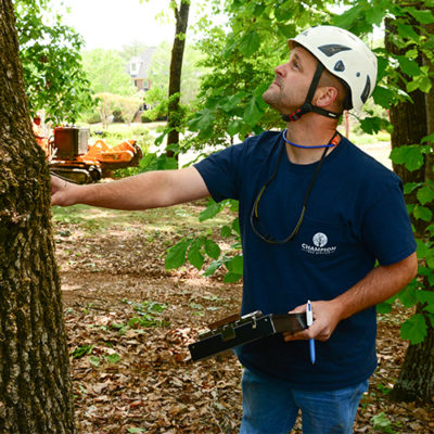 Birmingham tree inspection with Alabama's tree experts Scott Champion Tree Service